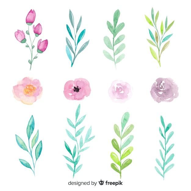 Przygotowania Kwiat I Liście Na Białym Tle Darmowych Wektorów