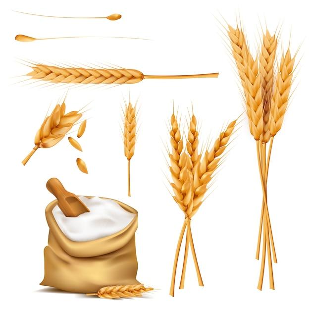Pszenica uszy, ziarna i mąka w zestawie wektor worek Darmowych Wektorów