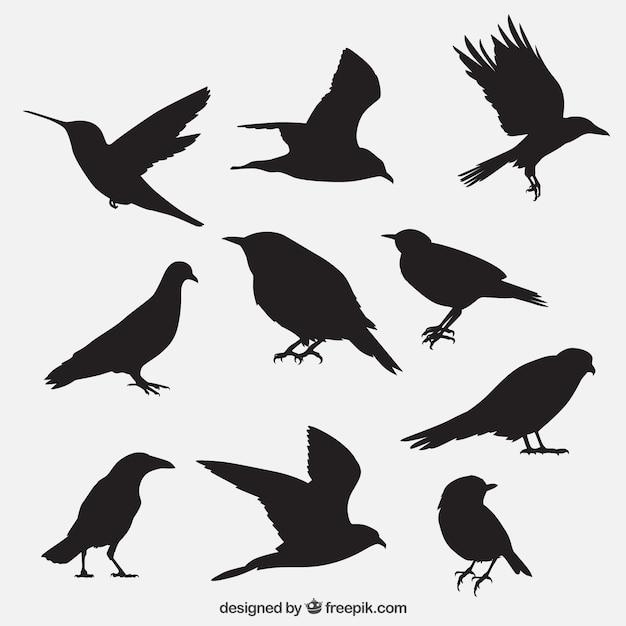 Ptak przedstawia kolekcję Darmowych Wektorów