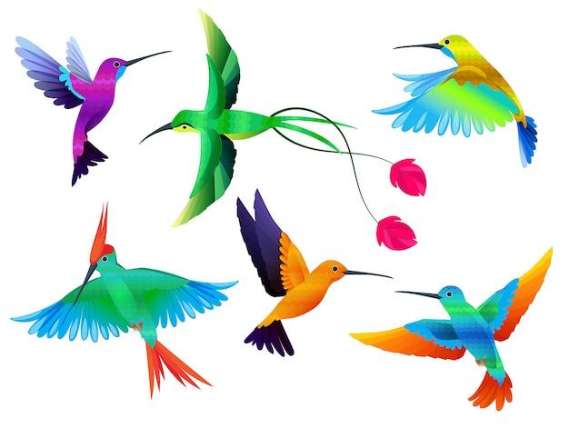 Ptaki Tropikalne. Kolibry Tukan Kolorowe Papugi Egzotyczne Ptaki Zoo Kreskówka Wektor Zbiory Premium Wektorów