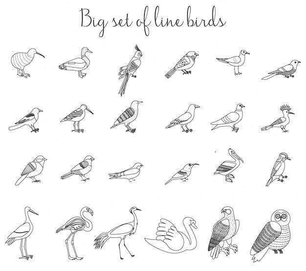 Ptaki zarys ikony cienka linia ilustracja. Premium Wektorów