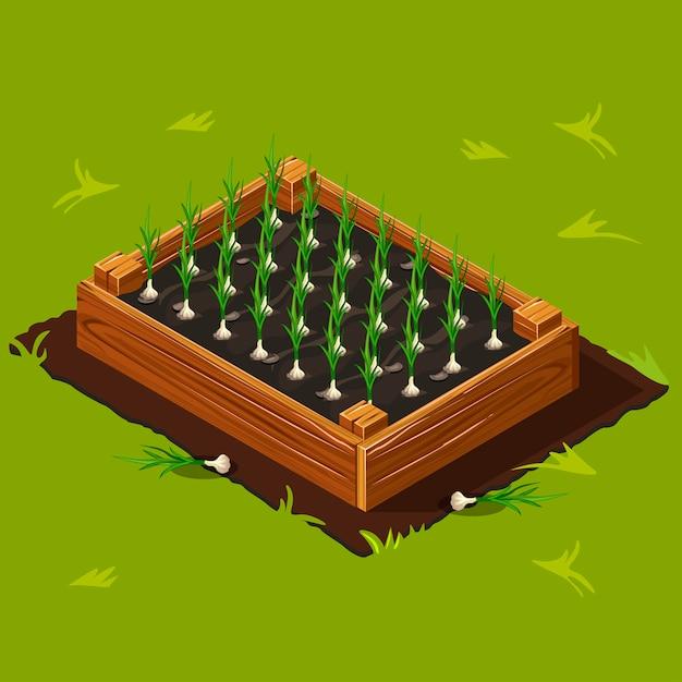 Pudełko Na Ogród Warzywny Z Czosnkiem Premium Wektorów