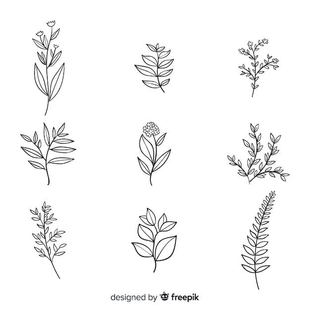 Realistyczna kolekcja kwiatów botanicznych Darmowych Wektorów