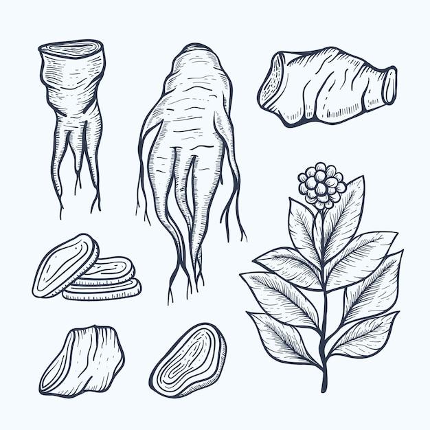 Realistyczna Kolekcja Roślin żeń-szenia Wyciągnąć Rękę Darmowych Wektorów