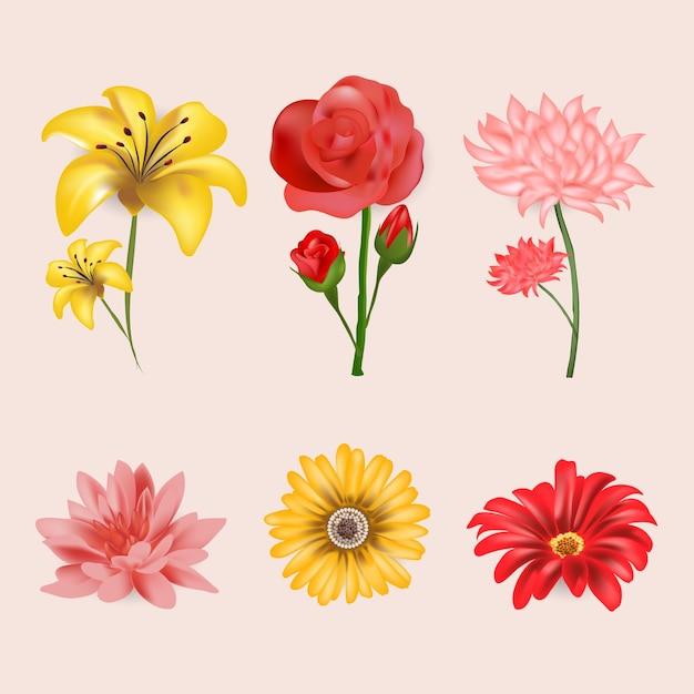 Realistyczna Kolekcja Wiosennych Kwiatów Darmowych Wektorów