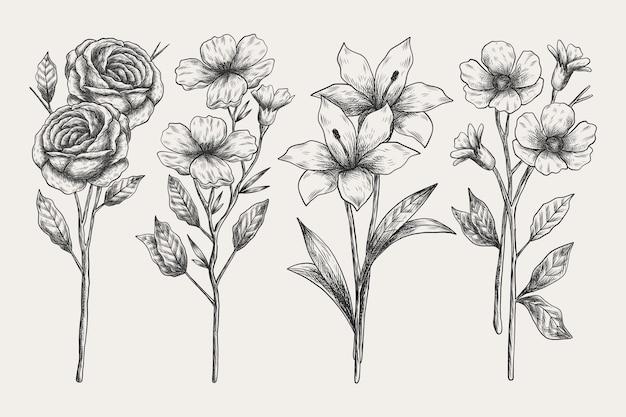 Realistyczna ręcznie rysowane kolekcja botaniki Darmowych Wektorów