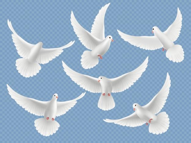 Realistyczne Gołębie. Biała Wolność Latające Ptaki Gołębie Symbole Religii Zdjęcia Kolekcja. Zestaw Ilustracji Wolności Gołębia I Biały Gołąb Premium Wektorów
