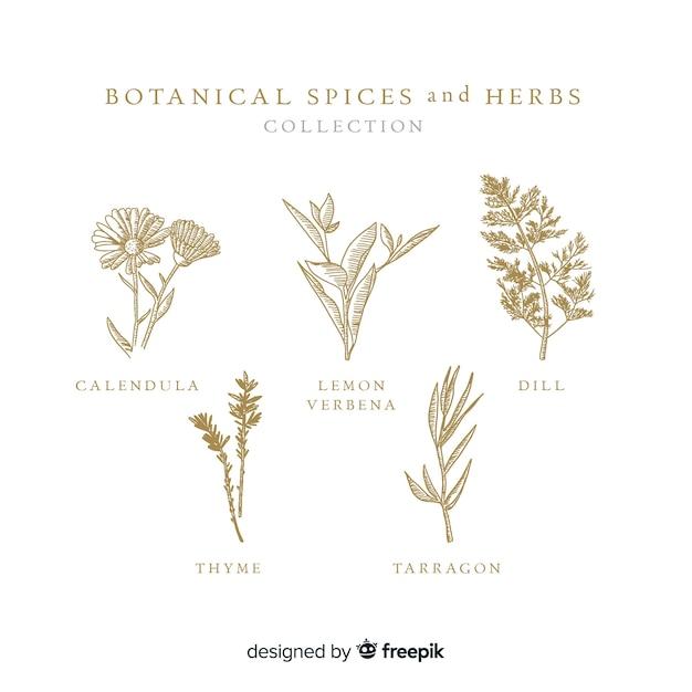 Realistyczne ręcznie rysowane botaniczne przyprawy i zioła Darmowych Wektorów