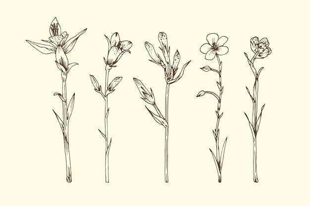 Realistyczne ręcznie rysowane zioła i dzikie kwiaty Darmowych Wektorów
