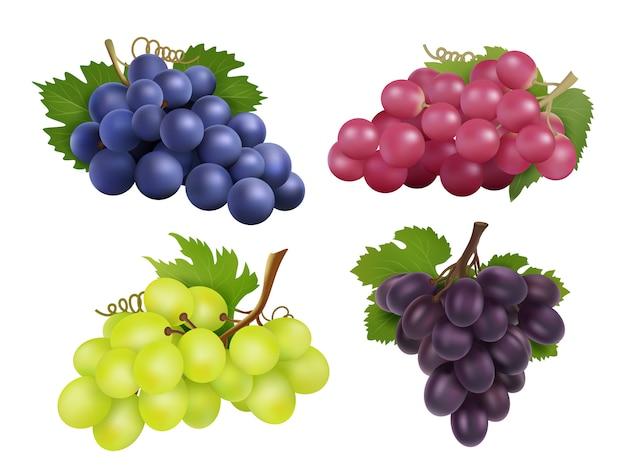 Realistyczne Winogrona. Premium Wektorów