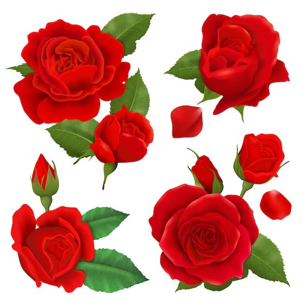 Realistyczny Kwiat Róży Zestaw Ikon Darmowych Wektorów