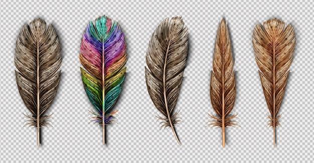Realistyczny Zestaw Z Małych I Dużych Kolorowych Piór Ptaków Na Białym Tle Premium Wektorów