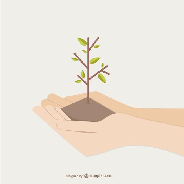 Ręce trzyma rosnące drzewo Darmowych Wektorów