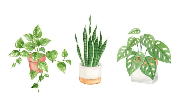Ręcznie Malowane Akwarelowe Rośliny Domowe Premium Wektorów