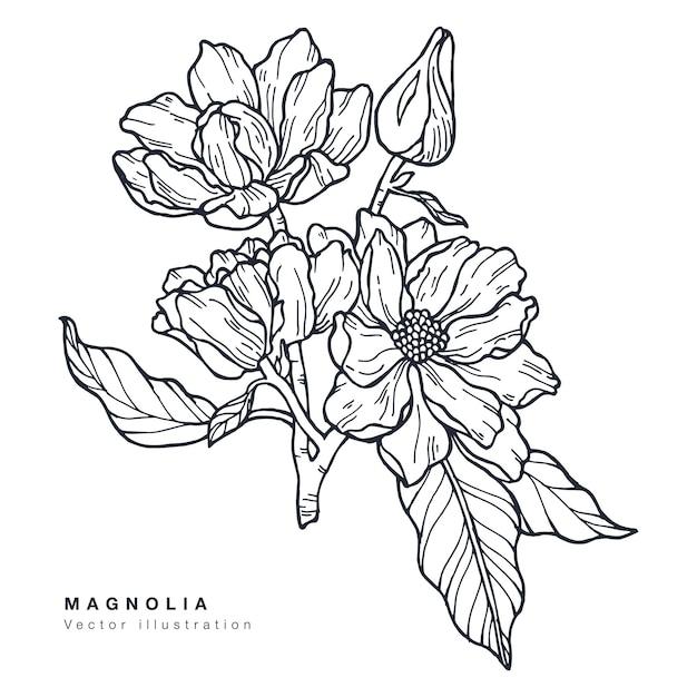 Ręcznie Rysować Ilustracja Kwiaty Magnolii. Wieniec Kwiatowy. Botaniczna Karta Kwiatowy Na Białym Tle. Premium Wektorów