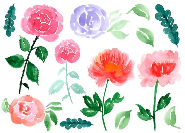 Ręcznie Rysowane Akwarela Róż I Liści Na Białym Tle Darmowych Wektorów