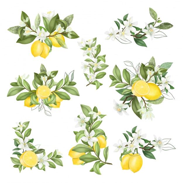 Ręcznie Rysowane Bukiety I Kompozycje Z Kwitnących Gałęzi Drzew Cytrynowych Premium Wektorów