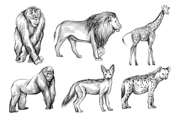 Ręcznie Rysowane Czarno-biały Szkic Zestaw Dzikich Zwierząt Z Afryki. Premium Wektorów