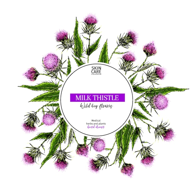 Ręcznie Rysowane Dzikie Kwiaty Siana. Wektor Mleka Marian Oset Kwiat. Premium Wektorów