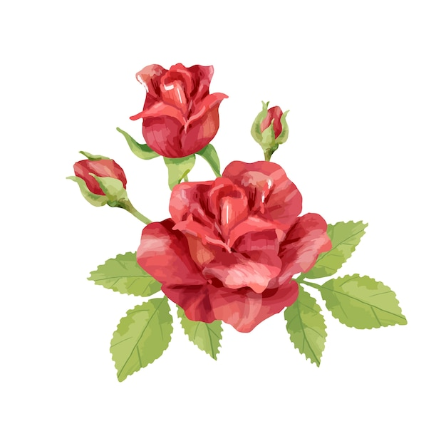 Ręcznie Rysowane Ilustracja Kwiat Róży Premium Wektorów