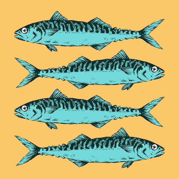 Ręcznie Rysowane Ilustracji Grupa Makreli Premium Wektorów