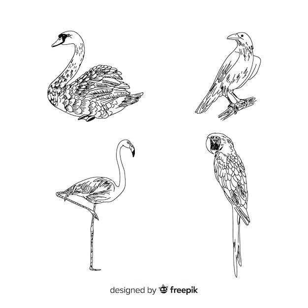 Ręcznie rysowane kolekcja ptaków egzotycznych Darmowych Wektorów