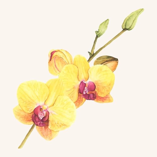 Ręcznie Rysowane Kwiat Orchidei Na Białym Tle Darmowych Wektorów