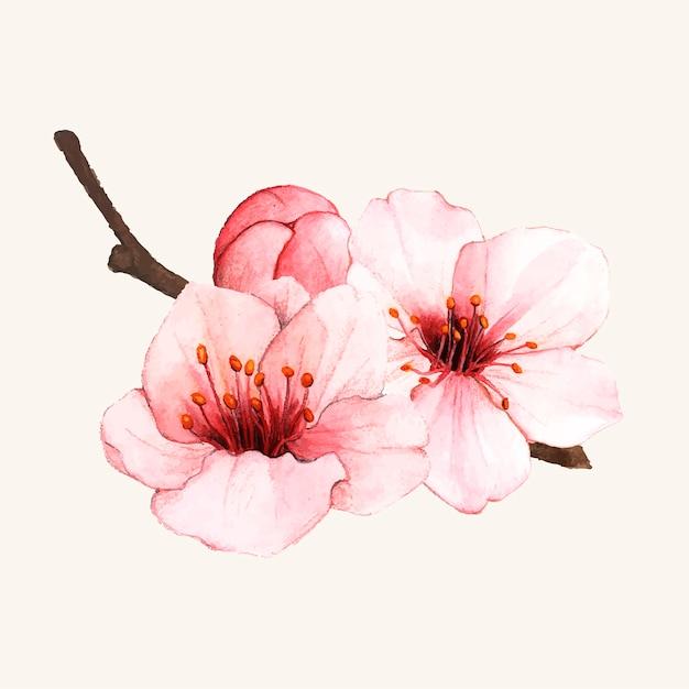 Ręcznie rysowane kwiat wiśni kwiat na białym tle Darmowych Wektorów