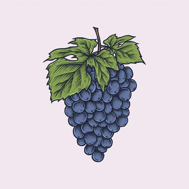 Ręcznie rysowane rocznika winogron Premium Wektorów