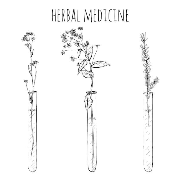 Ręcznie Rysowane Rośliny Lawendy, Kwiaty In Vitro Lub Fiolka, Szkic Ilustracji Premium Wektorów