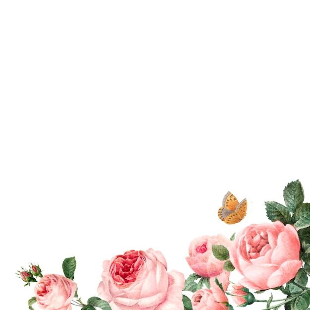 Ręcznie rysowane różowe róże ramki na białym tle wektor Darmowych Wektorów