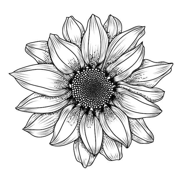 Ręcznie Rysowane Stokrotka Kwiat Premium Wektorów