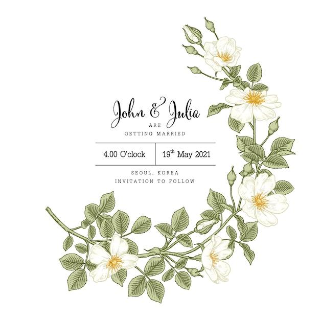 Ręcznie Rysowane Szablon Karty Zaproszenie Kwiat Białej Róży (rosa Canina). Premium Wektorów
