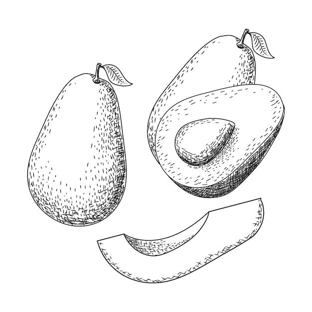Ręcznie Rysowane Szkic Awokado. Rysunek żywności Owoców Tropikalnych Lato. Premium Wektorów