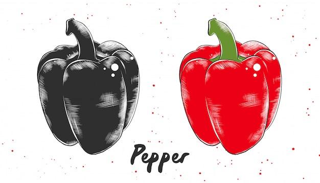 Ręcznie rysowane szkic czerwonego bułgarskiego pieprzu Premium Wektorów