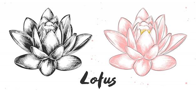 Ręcznie rysowane szkic kwiatu lotosu Premium Wektorów