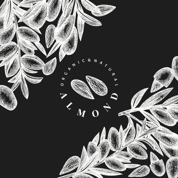 Ręcznie Rysowane Szkic Szablon Projektu Migdałów. Ilustracja Wektorowa żywności Ekologicznej Na Tablicy Kredowej. Ilustracja Rocznika Nakrętki. Tło Botaniczne W Stylu Grawerowanym. Premium Wektorów
