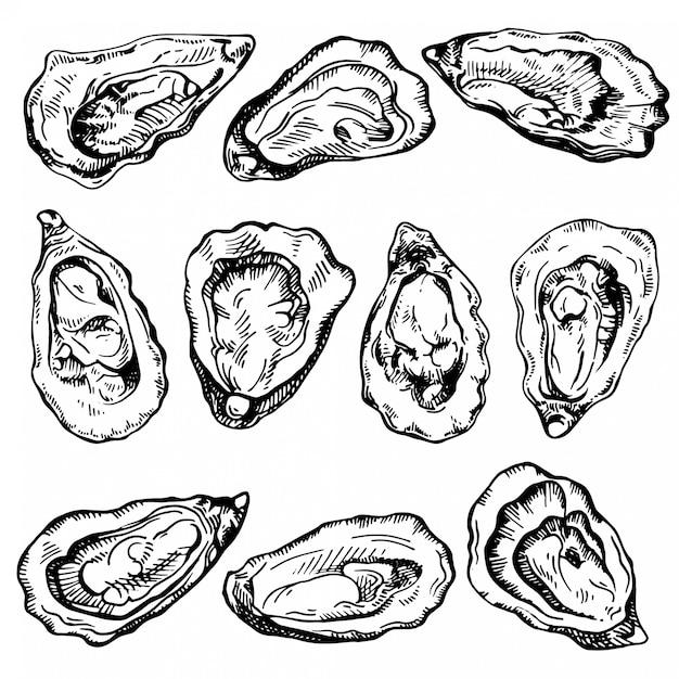 Ręcznie Rysowane Szkic Zestaw Ostryg. Szkic Ilustracji świeżych Owoców Morza. Premium Wektorów