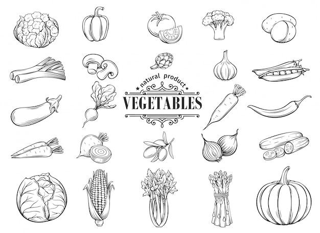 Ręcznie Rysowane Warzywa Zestaw Ikon. Dekoracyjny Premium Wektorów