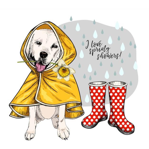 Ręcznie Rysowane Wektor Retriever Labrador W Płaszcz I Gumboots. Premium Wektorów