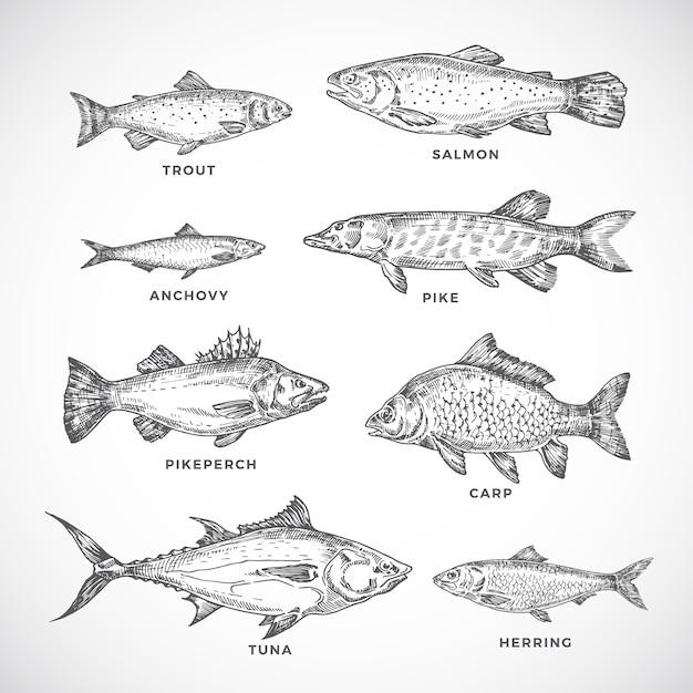 Ręcznie Rysowane Zestaw Ryb Oceanicznych Lub Morskich I Rzecznych. Premium Wektorów