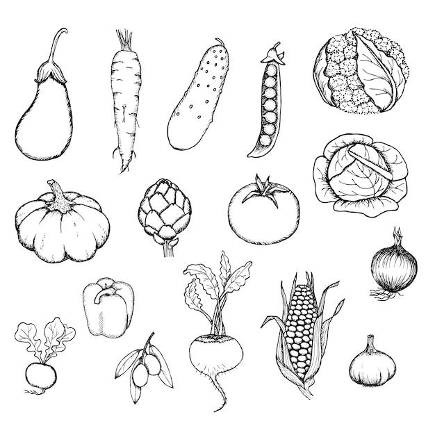 Ręcznie Rysowane Zestaw świeżych Organicznych Warzyw Darmowych Wektorów