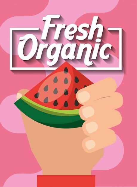 Ręka trzyma arbuza świeżych owoców organicznych Premium Wektorów