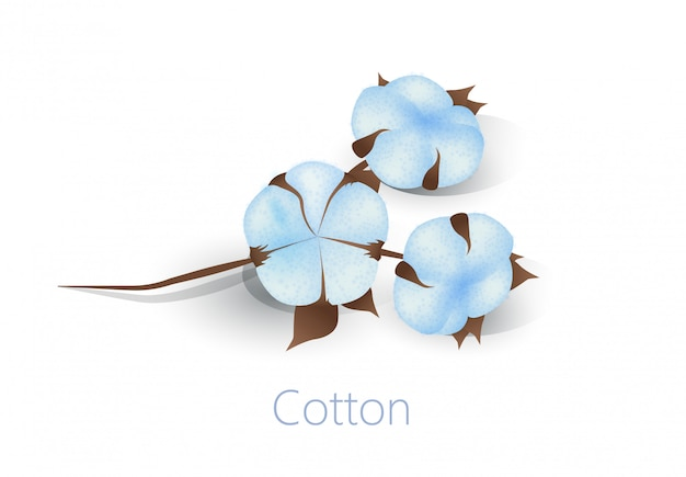 Reklama Baner Z Bawełnianymi Kwiatami Odizolowywającymi Na Bielu Premium Wektorów