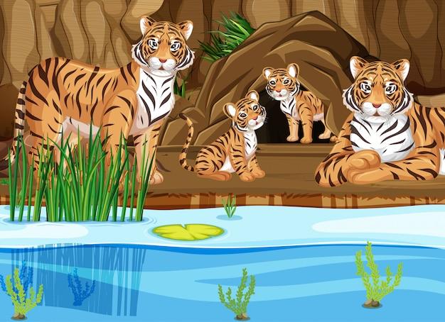 Rodzina tygrysów nad stawem Darmowych Wektorów