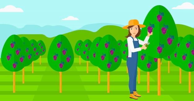 Rolnik Zbierający Winogrona. Premium Wektorów