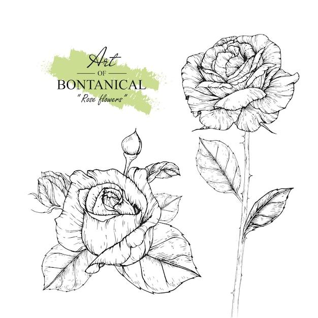 Rose leaf i kwiatowe rysunki Premium Wektorów