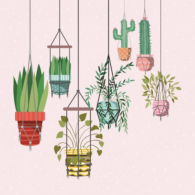 Rośliny domowe w wieszakach z makramy Premium Wektorów