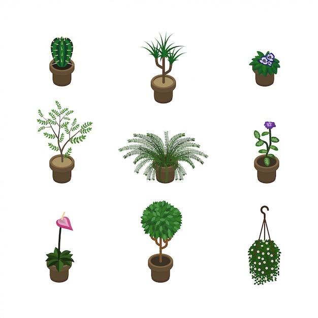 Rośliny Izometryczne Premium Wektorów