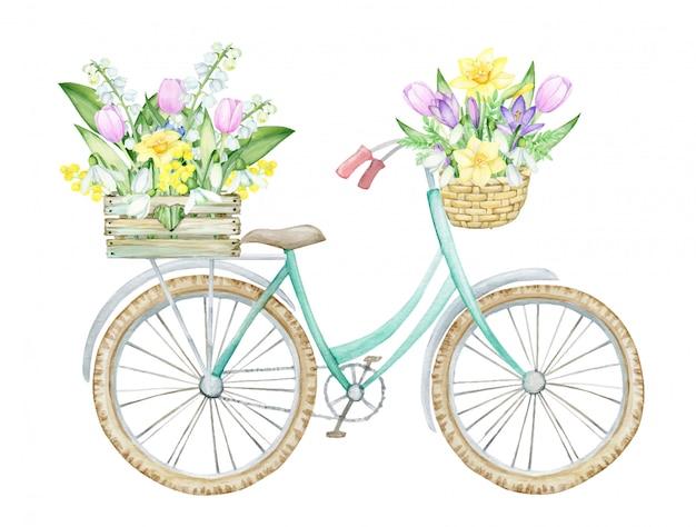 Rower, Drewniane Pudełko Z Wiosennymi Kwiatami, Wiklina, Kosz Z Kwiatami I Liśćmi. Wiosna, Koncepcja Na Białym Tle, Akwarela, Rysunek. Premium Wektorów